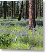 Lovely Lupine In The Mountains Metal Print