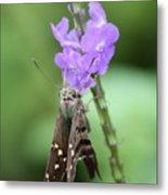 Lovely Moth On Dainty Flower Metal Print