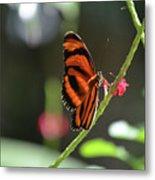 Lovely Orange Oak Tiger In The Spring Metal Print