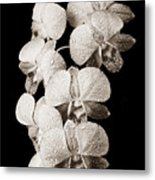 Lovely Orchid Cluster Metal Print