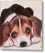 Lovely Pet Metal Print