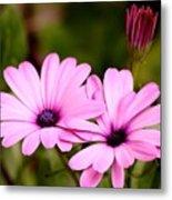 Lovely Pink Petals Metal Print