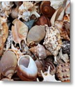 Lovely Seashells Metal Print