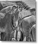 Lovely Stripes  7589bw Metal Print