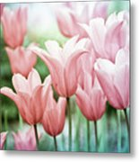 Lovely Tulips Metal Print