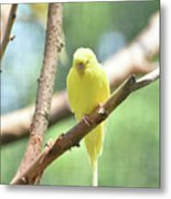 Lovely Yellow Budgie Parakeet In The Wild Metal Print