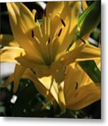 Lover's Lilly II Metal Print