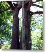 Lover's Tree Metal Print