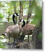 Loving Couple Metal Print