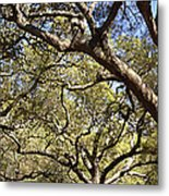 Low Angle View Of Trees In A Park Metal Print
