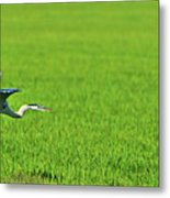 Low Flight Metal Print