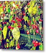 Low Hanging Fruit Metal Print