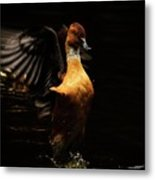 Low Key Duck Metal Print