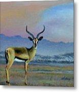 Lowell's Gazelle Metal Print