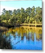 Lower Suwannee National Wildlife Refuge Ti Metal Print