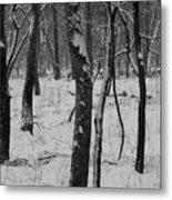 Lowland Winter Metal Print