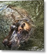 Lu The Homosassa Hippo Metal Print