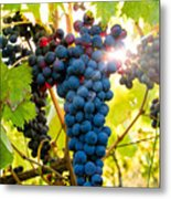 Luminous Grapes Metal Print