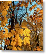 Luminous Leaves Metal Print