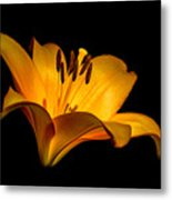 Luminous Lilly Metal Print