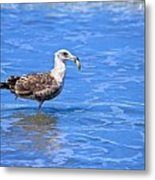 Lunchtime At Coronado Beach Metal Print