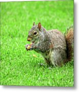 Lunchtime In The Park Metal Print