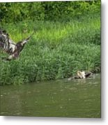 Lunchtime On The River Metal Print