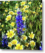Lupine Amidst Tidy Tips Metal Print