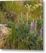 Lupine Among The Weeds  Metal Print
