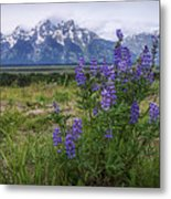 Lupine Beauty Metal Print