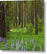 Lupine Carpet Metal Print