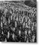 Lupine Hilltop Metal Print