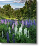 Lupine In The Valley Metal Print