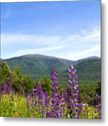 Lupines And The Presidentials Metal Print