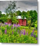 Lupines And The Red Barn Metal Print