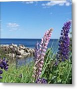 Lupines At Lake Superior Metal Print