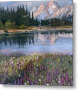 Lupines At Pilgrim Creek Metal Print