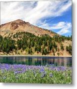 Lupines Lake And Lassen Metal Print