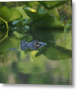 Lurking At The Surface Metal Print
