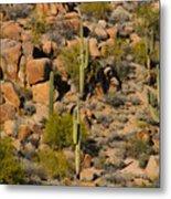 Lush Arizona Desert Landscape Metal Print