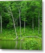 Lush Green Pond Metal Print