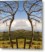 Lush Land Leafless Trees IIi Metal Print