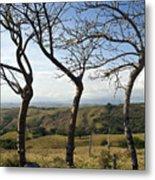 Lush Land Leafless Trees Iv Metal Print