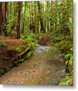 Lush Redwood Forest Metal Print