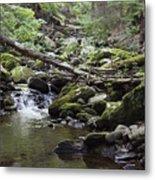Lush Stream And Canopy Foliage Metal Print
