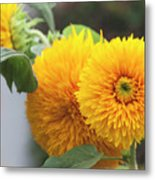 Lush Sunflowers Metal Print