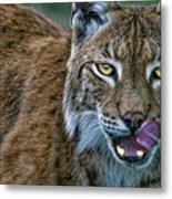 Lynx Licks Lips Metal Print