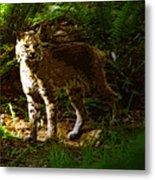 Lynx Rufus Metal Print