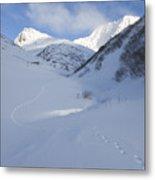 Lynx Tracks In A Mountain Pass Metal Print