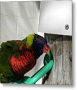 Macaw-1 Metal Print